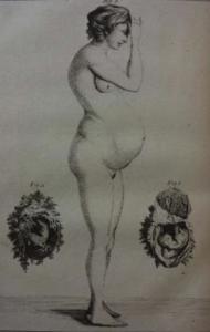 primacy of female body