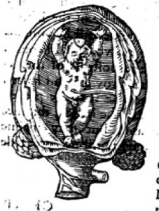 ruff fetus