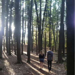 The woods at Hampshire College - Amherst, Massachusetts