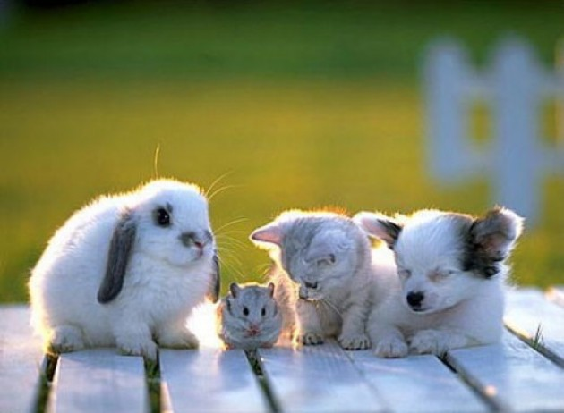 The cutest form of networking EVER.