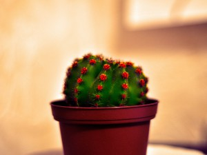 Green-Cactus-Image-Beautiful-Cactus-in-Basket-Indoor-Flowers
